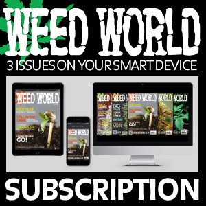 3 Issue Downloadable Subscription