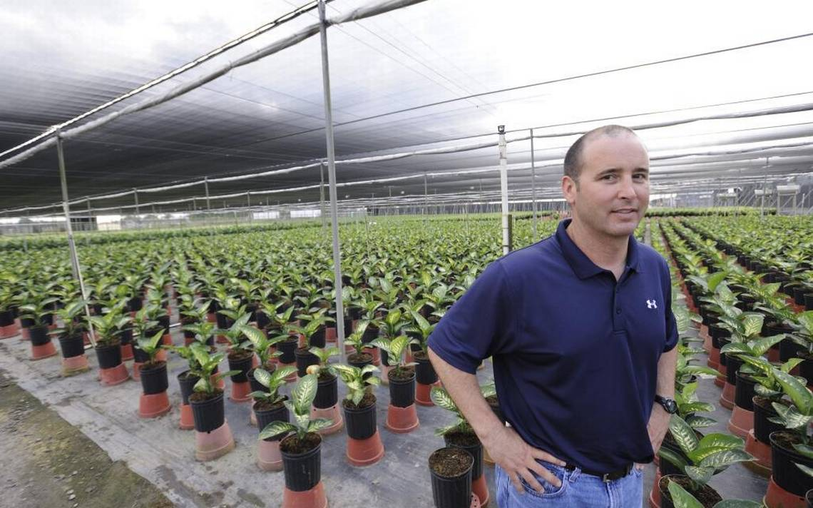 Florida Roves 5 Nurseries To Grow Medical