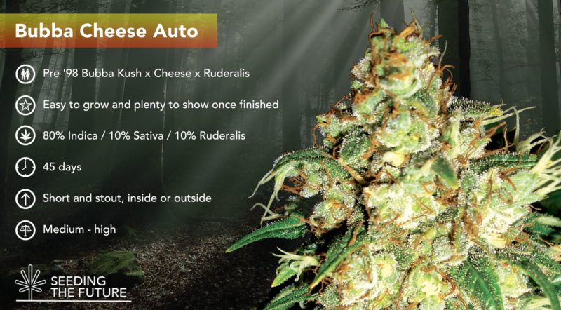 Bubba Cheese Auto - ETS
